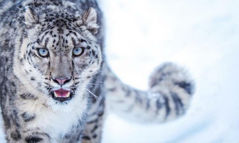 Величие и грация: 10 захватывающих фильмов о больших кошках