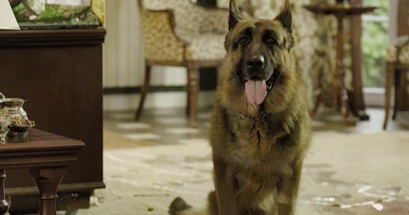 """Отзывы американцев о популярном сериале """"Пёс"""". Оказывается, они его тоже смотрят"""